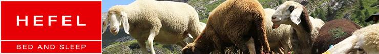 Banner voor hefel met daarop schapen en het Hefel logo