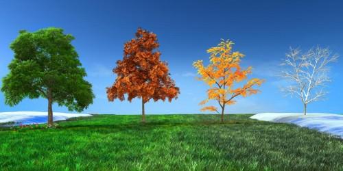 Bomen gekleurd naar de 4 seizoenen