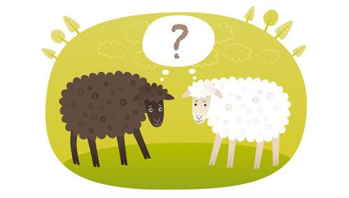 Twee schapen met een vraagteken